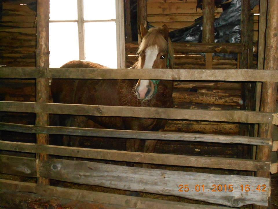 къща карина село орехово супер цени нощувки промоция конна база евтино изгодно